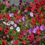 Flower garden in Odessa.