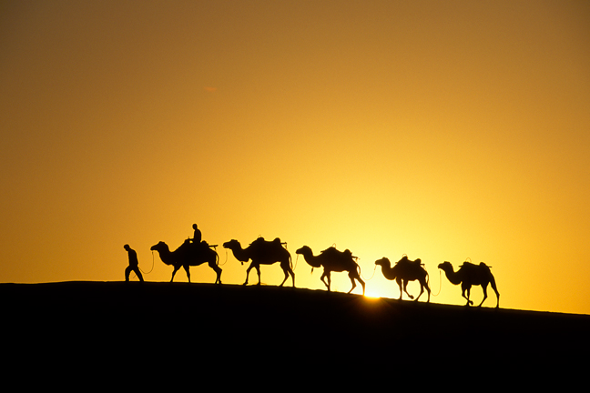 Camel caravan in the Sahara.