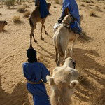 Group of Tuareg traveling by camel