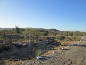 Daytime in Catavina desert, Mexico.