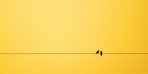 minimalism-birds-background