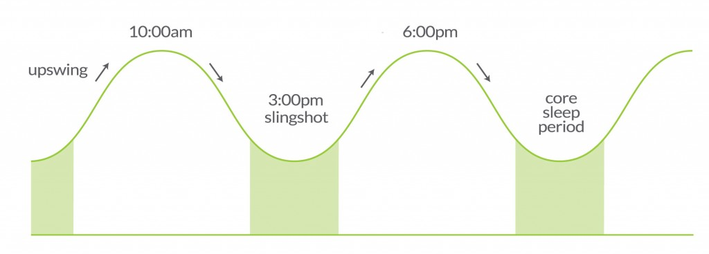 The slingshot effect of the circadian rhythm