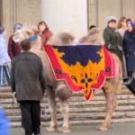 Camel rides in Minsk