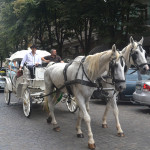 Horse chariot in streets of Odessa.