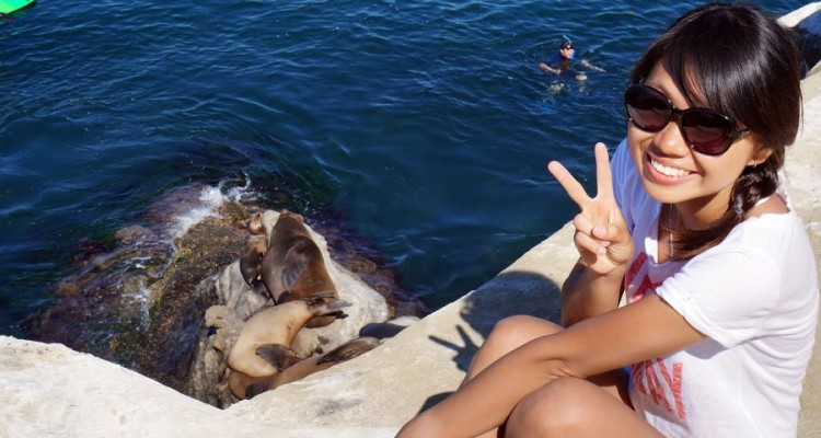 With seals at the La Jolla Cove, CA.