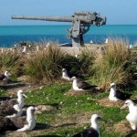 Goonie birds hanging out near a gun at Midway Island.