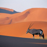 Arabian desert with antelope in the foreground.