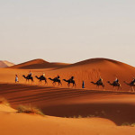 Desert caravan in the Arabian desert.