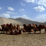 Camels in front of Mingshashan