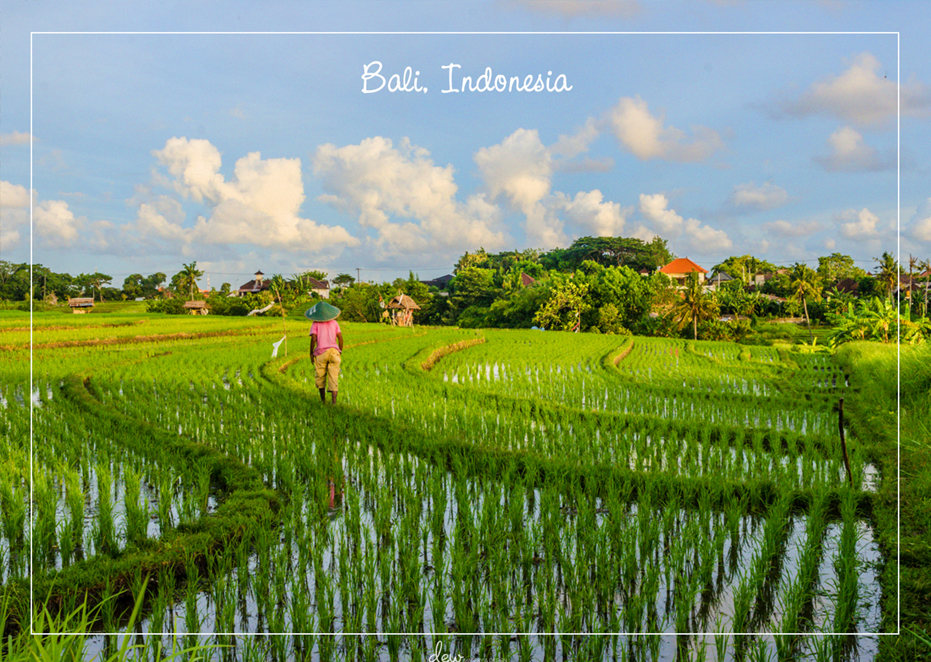 bali-rice-fields-postcard
