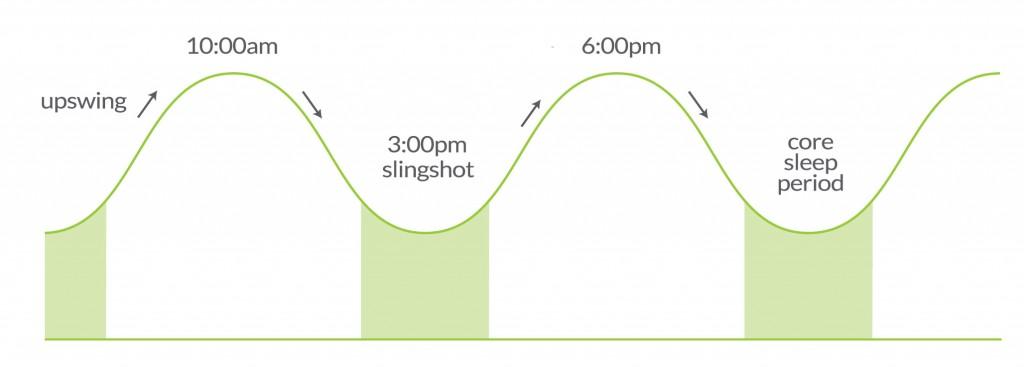 The slingshot effect of the circadian rhythm