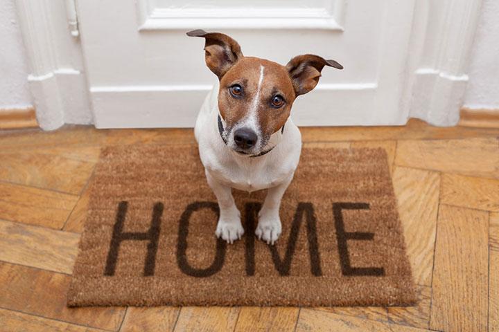 dog-housesit